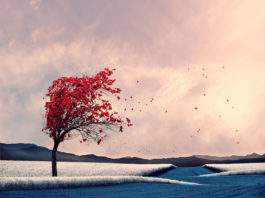 Caras Ionut a jeho svet fantázie zachytený na krásnych fotografiách 26