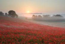 Krásne fotografie miest zahalených hmlou 2