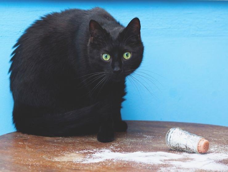 pekná čierna mačička